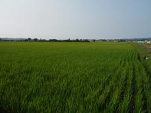 farm_pic-01