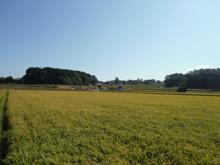 farm_pic-10